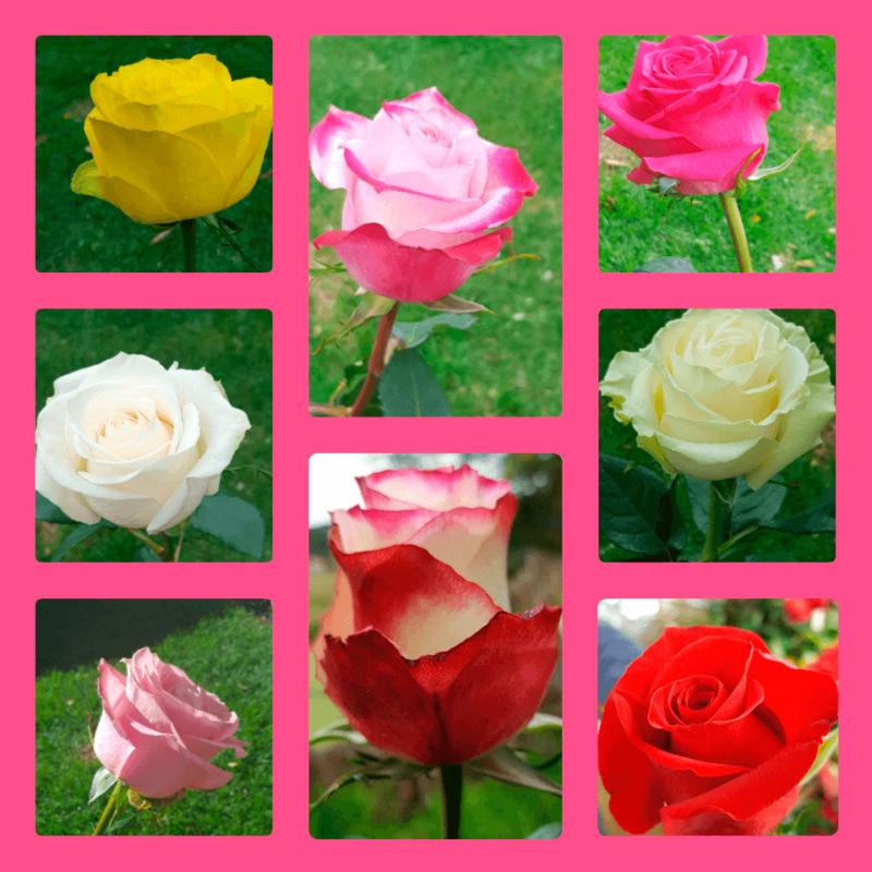Tipos de flores entrega floral casa maria floreria for Tipos de arboles y su significado